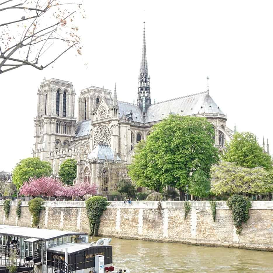 notre dame and cherry blossom