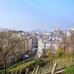 vigne de la butte bergeyre secret vineyards of paris