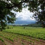 reasons to visit les vignerons du saint victoire