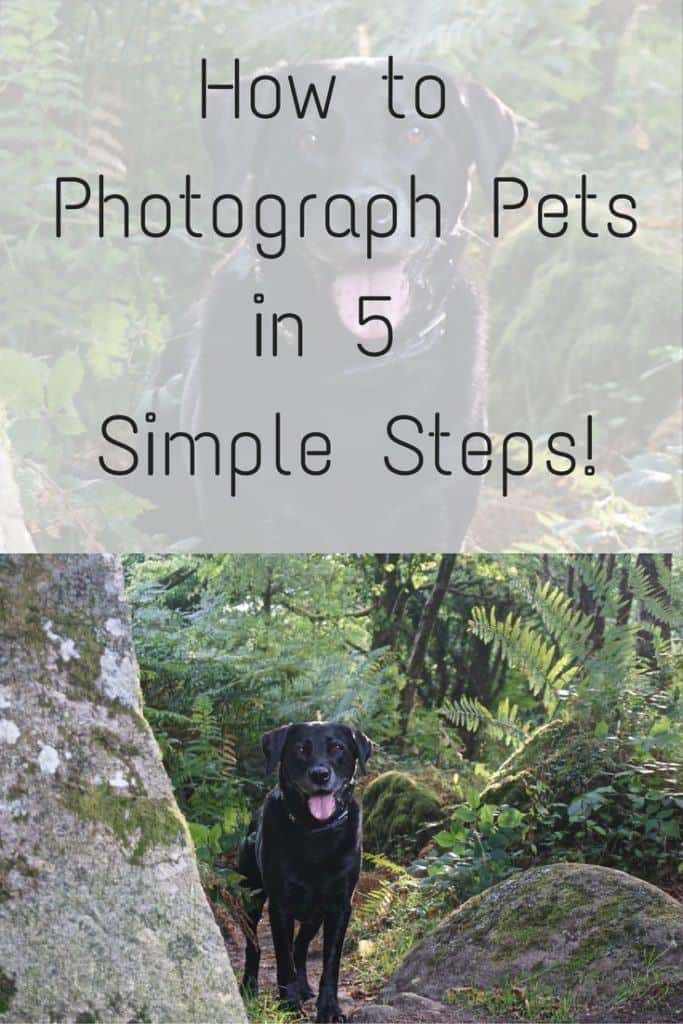 how to photograph pets in 5 simple steps