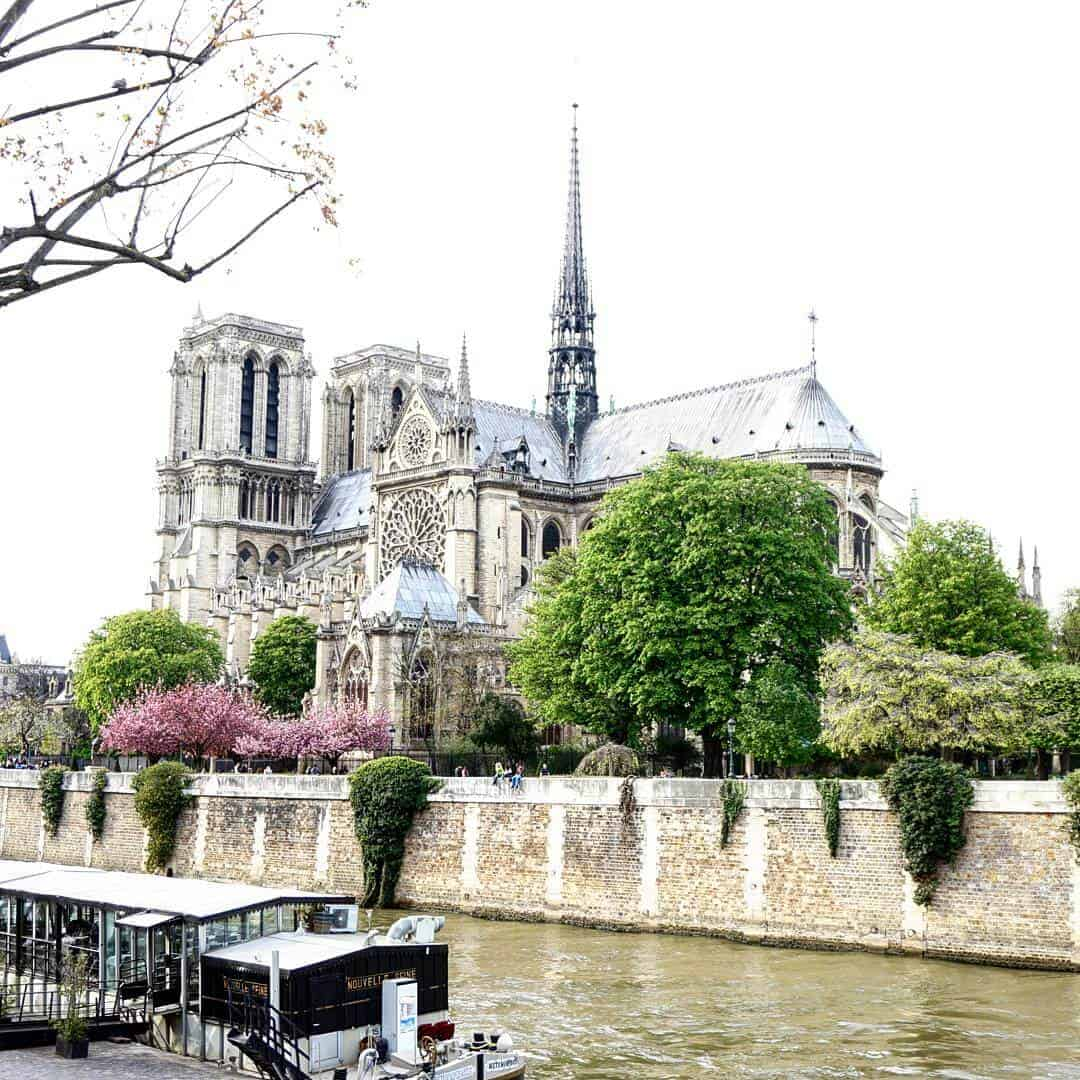 where to find the best cherry blossoms at notre dame in paris, france
