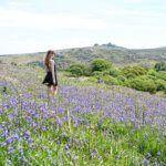 best bluebell field on dartmoor, devon, England: Holwell Lawn