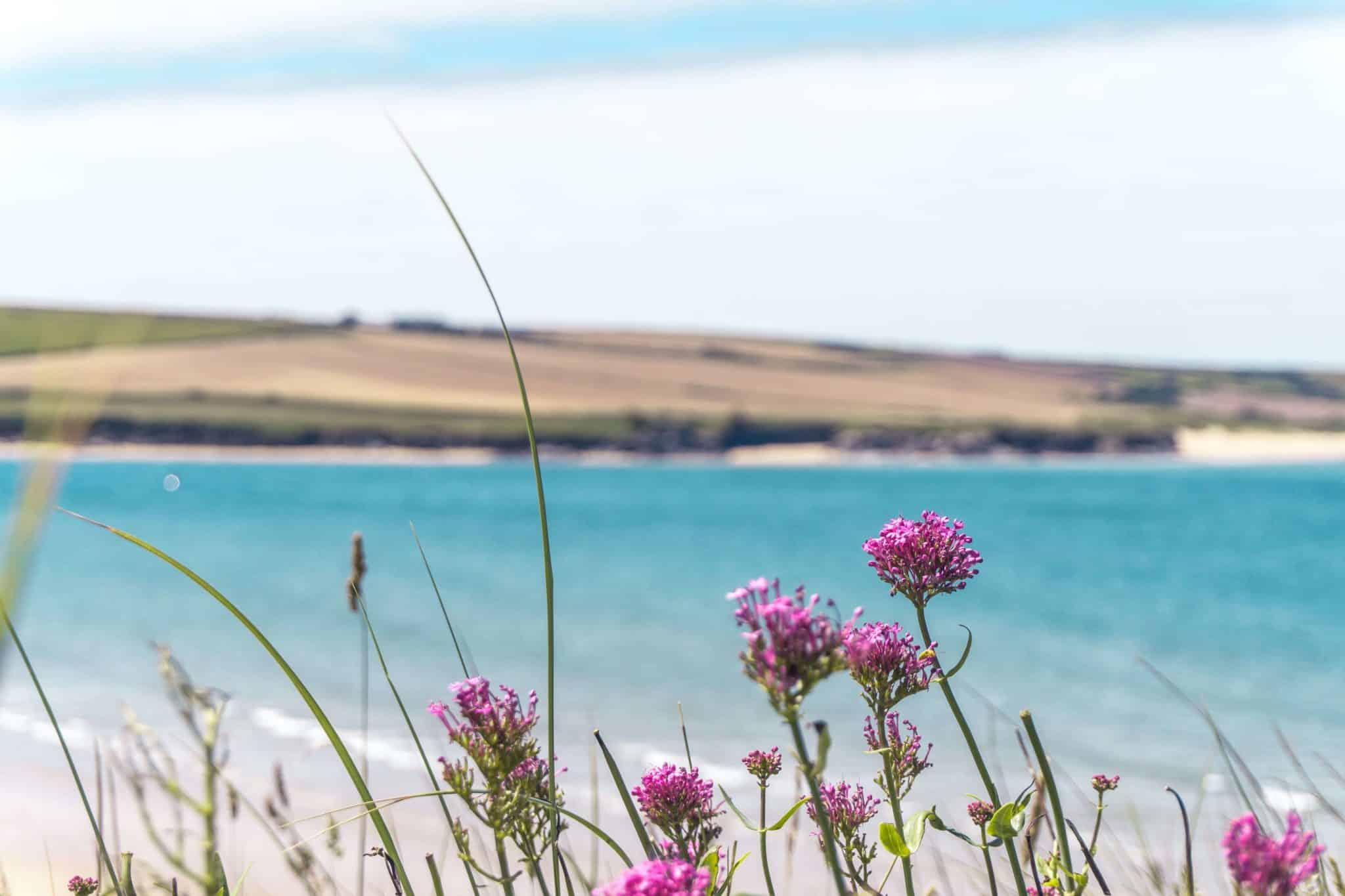 Guide to Rock: things to do in North Cornwall: