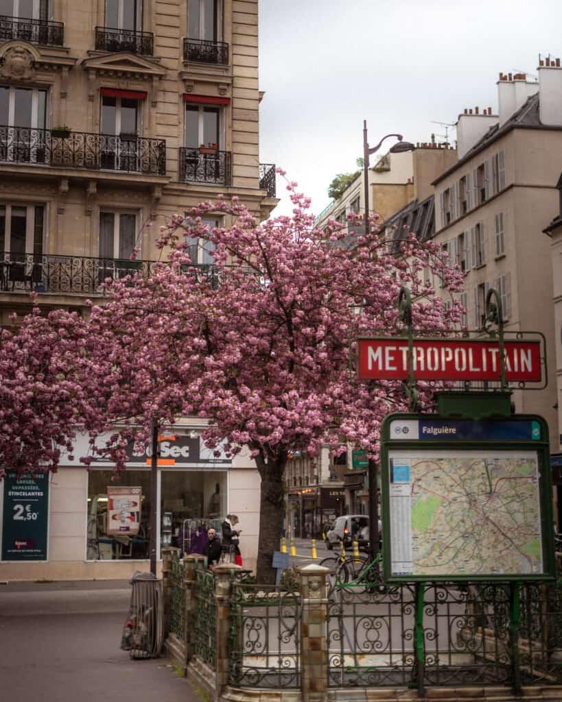 Falguière metro station cherry blossoms