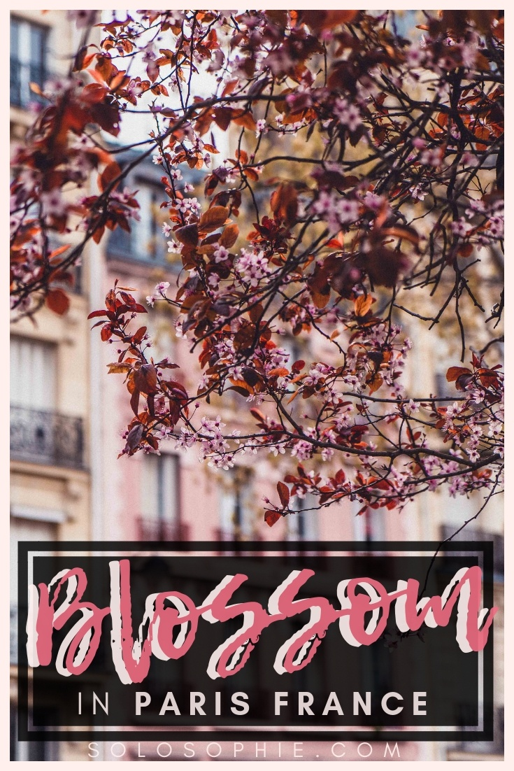 Here's your guide to finding the best cherry blossoms in Paris, France. If you're looking for spring blooms and early year flowers in March through to April, here are all the best locations to see blossom in the French capital!