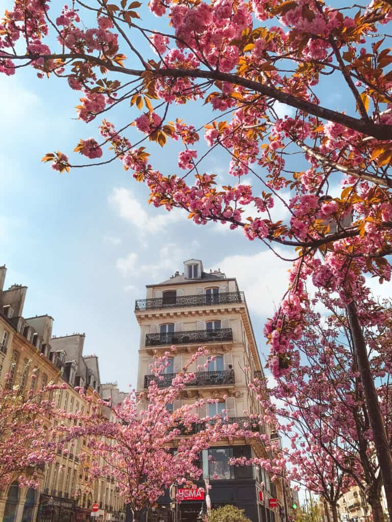 metro saint paul cherry blossoms