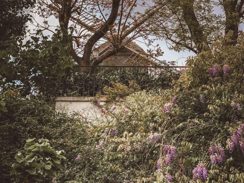 rue Tholozé wisteria view