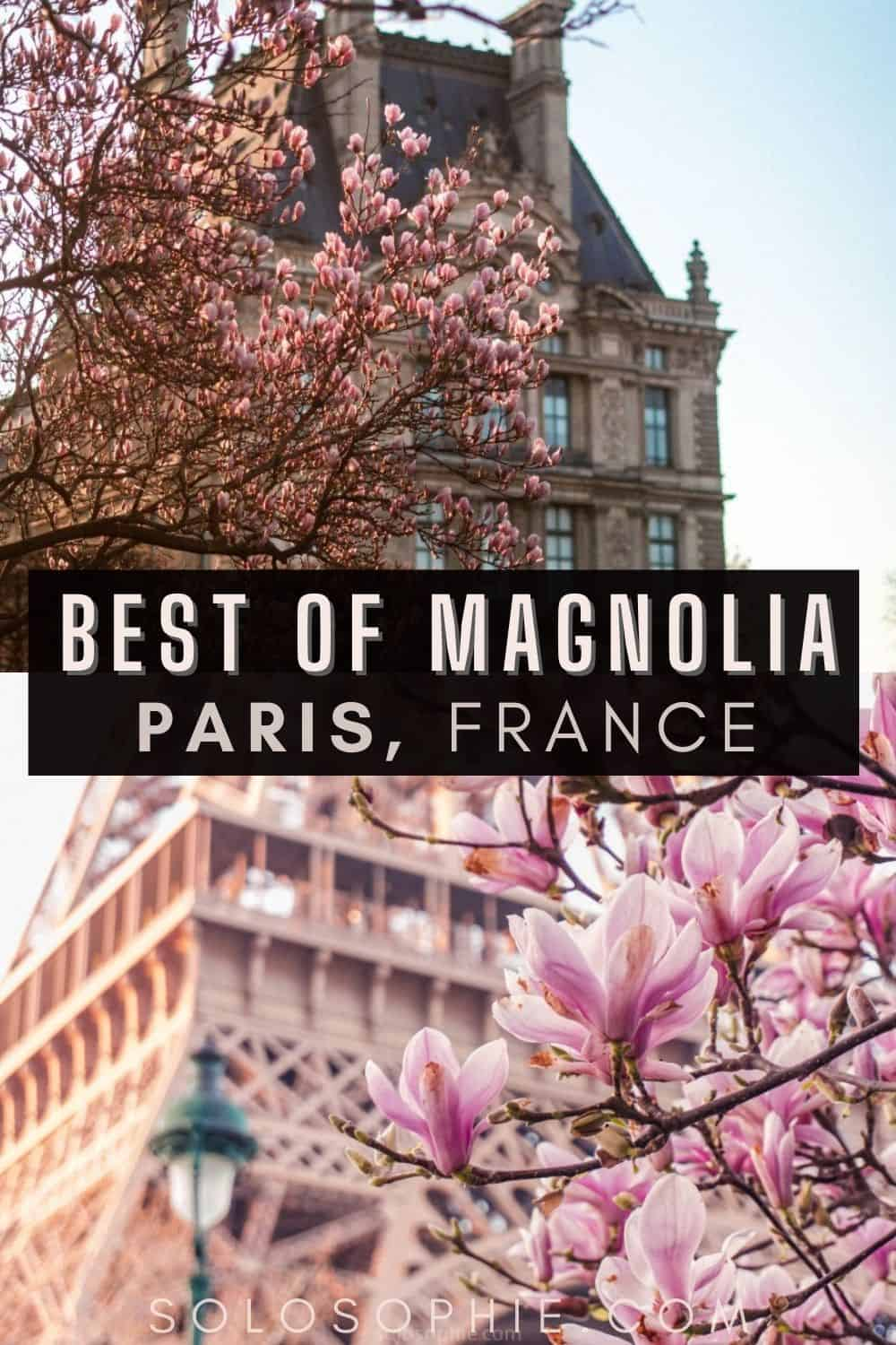 Spring in the City: Where to Find Magnolia Trees in Paris