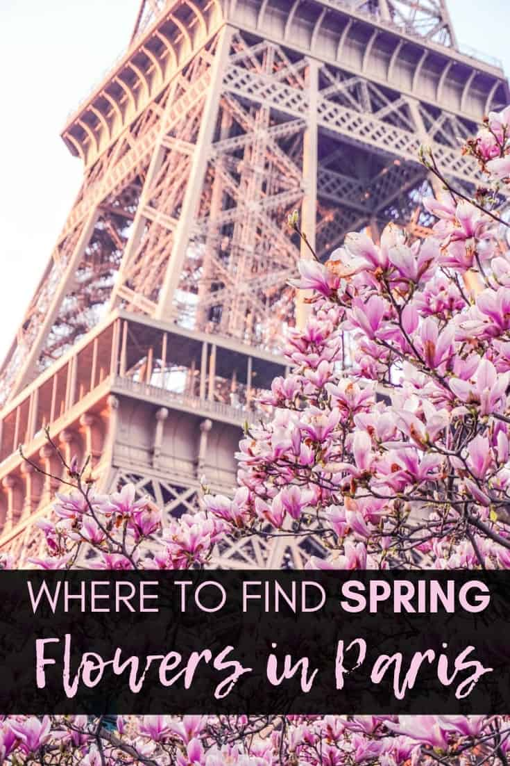 Where to find spring flowers in Paris. Here's your complete guide to locations for spotting magnolia flowers in Paris