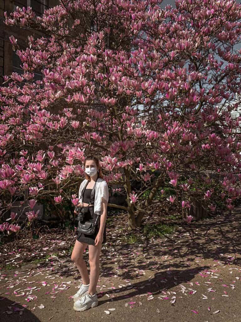 jardin des plantes magnolia trees