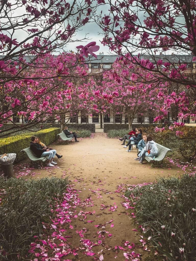 palais royal magnolia