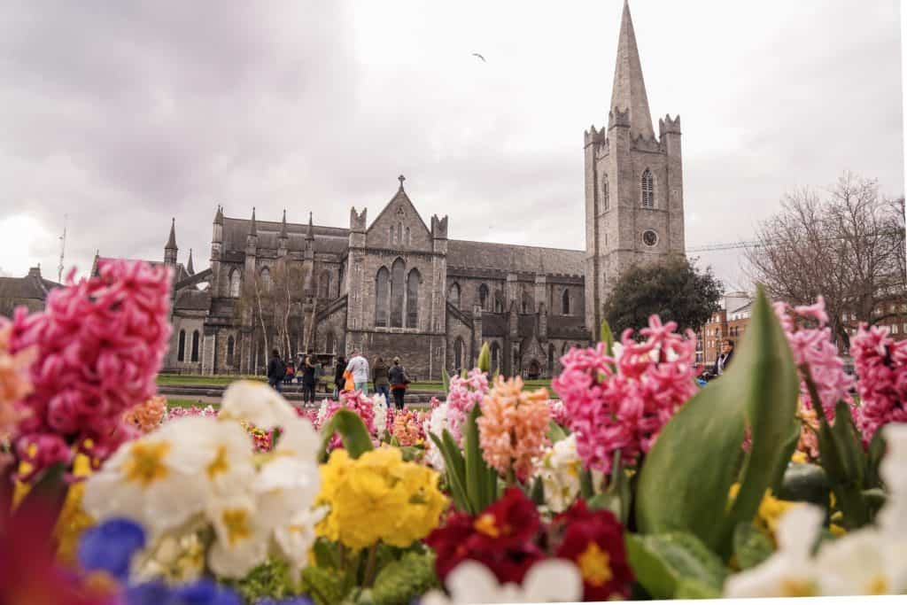 A quick guide on where to find the very best cherry blossom in Dublin. Here's all the best photo spots and parks for seeing hyacinth, spring blooms, and magnolia trees in the Irish Capital, Dublin, Ireland!