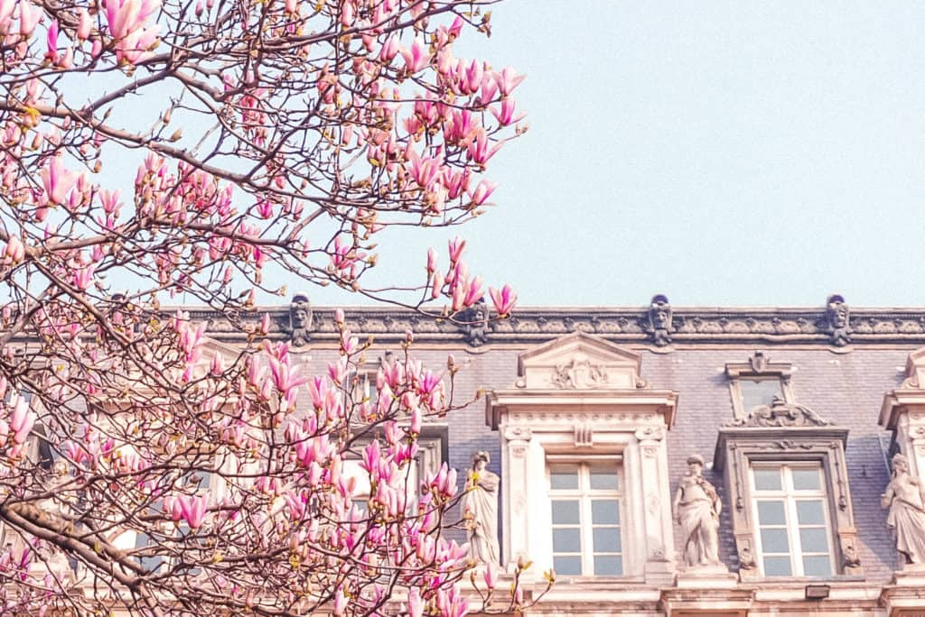 Where to see the very best magnolia trees in Paris France: Here's your complete guide to spotting spring blooms in the French capital!
