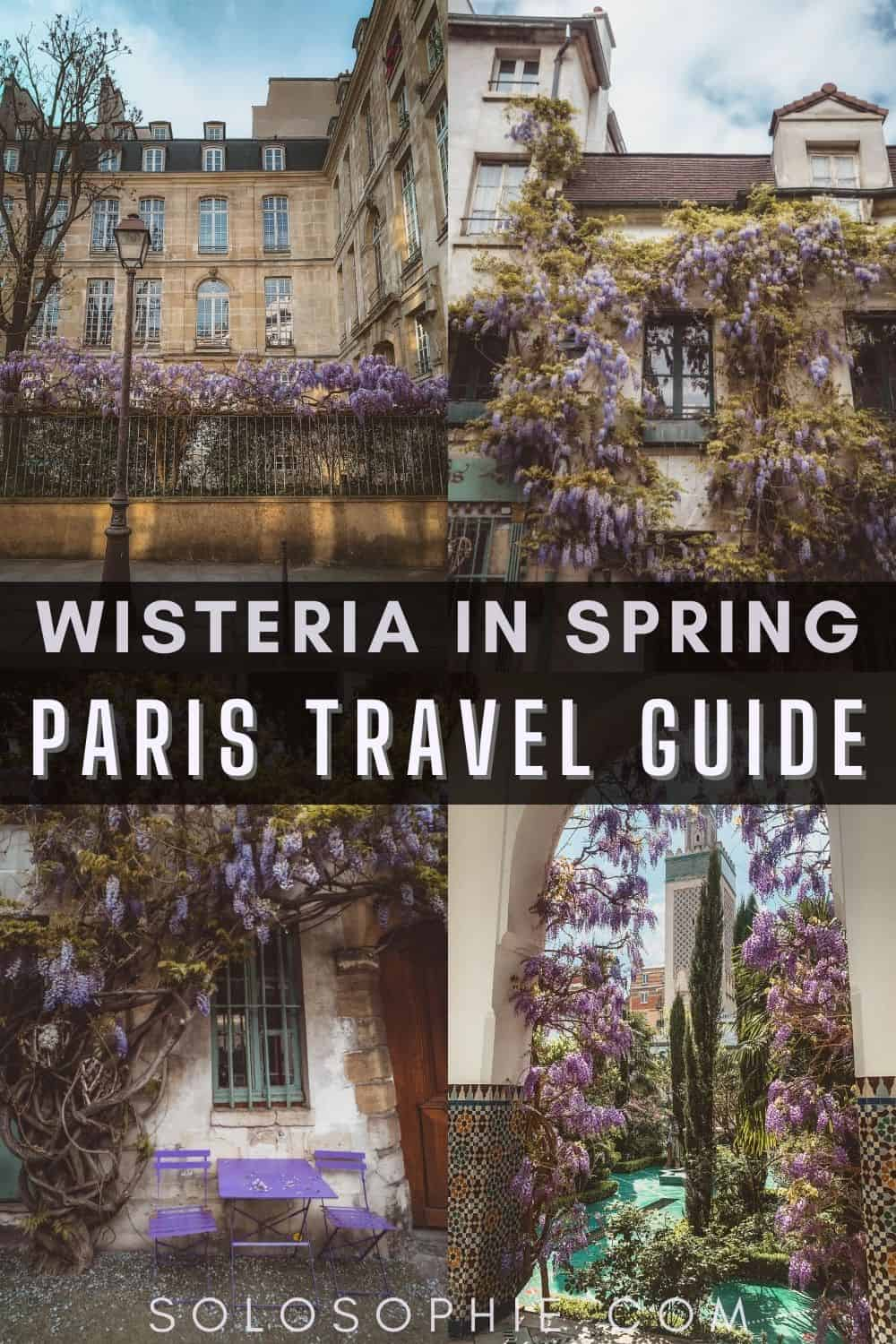 Paris in the spring/ When & Where to Find the Best Wisteria in Paris France