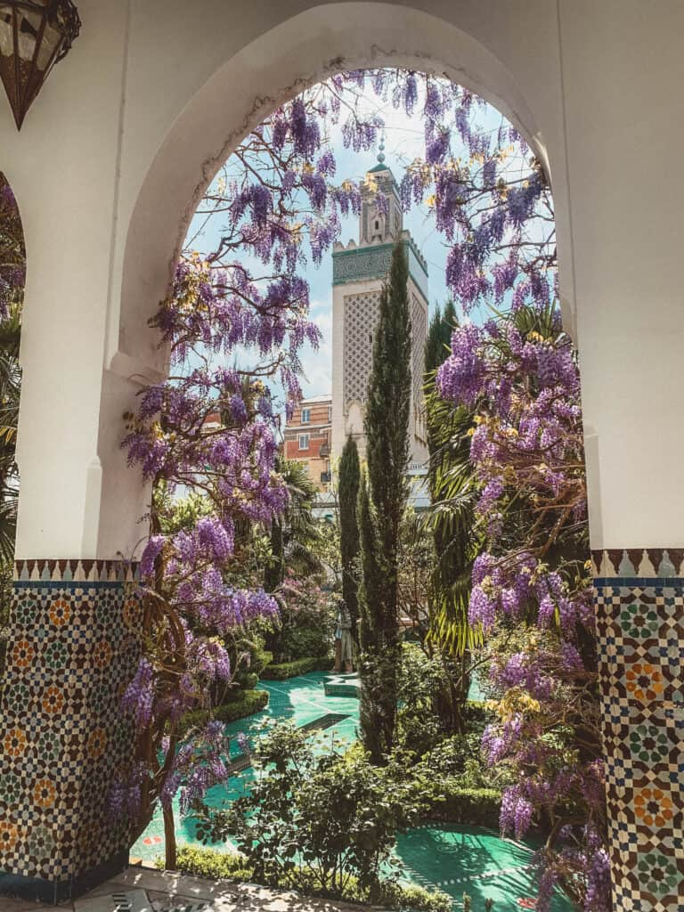 Grand Mosquée de Paris wisteria