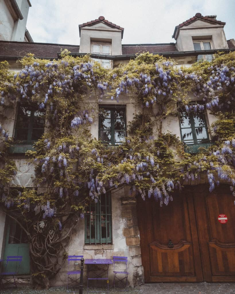 wisteria in paris