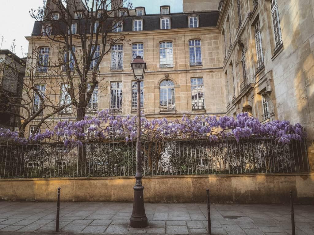 Métro Saint-Paul wisteria
