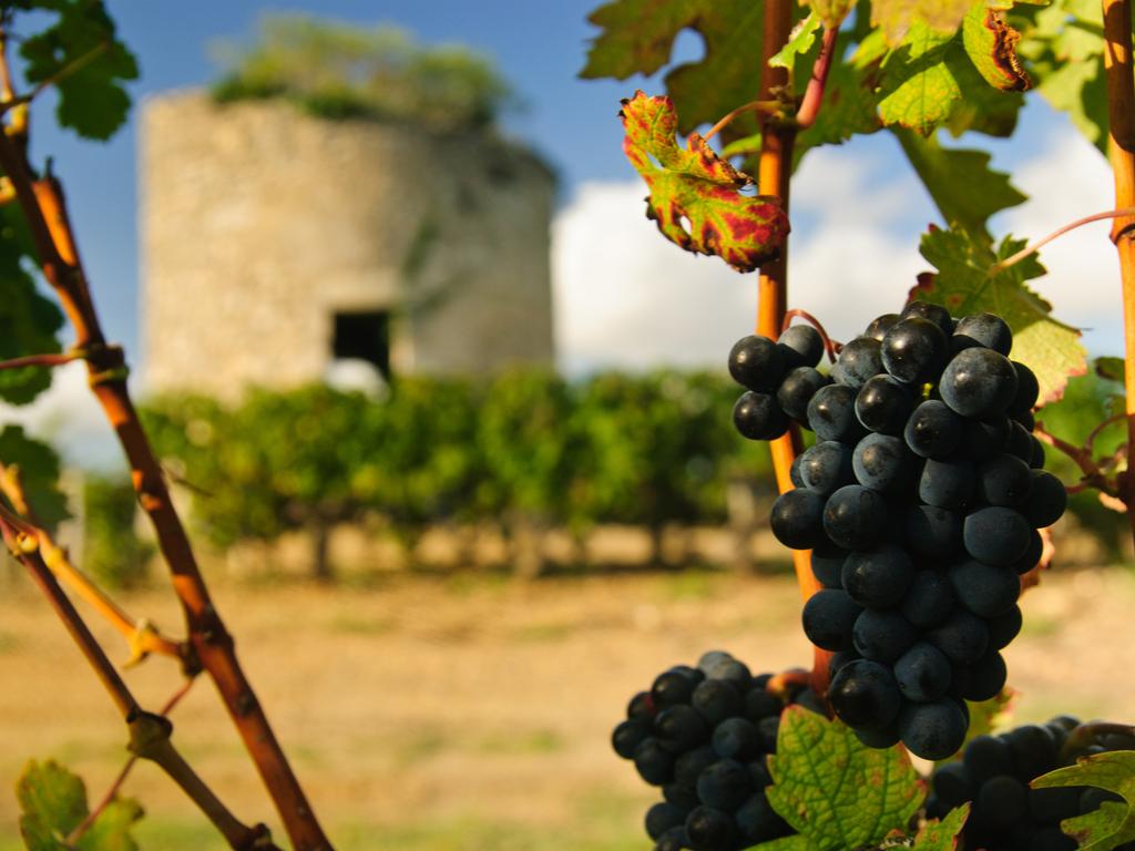 medoc wine region