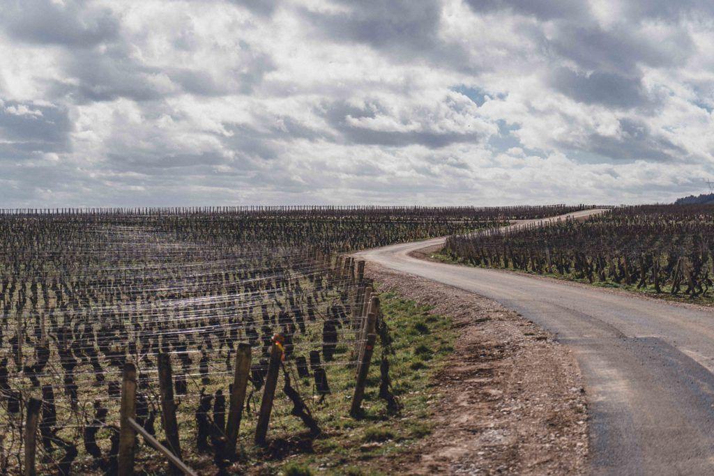Vineyard in the spring in Burgundy, France