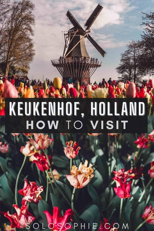 Best of Keukenhof the Netherlands/ An Insider's Guide on How to Visit Keukenhof, the Garden of Europe