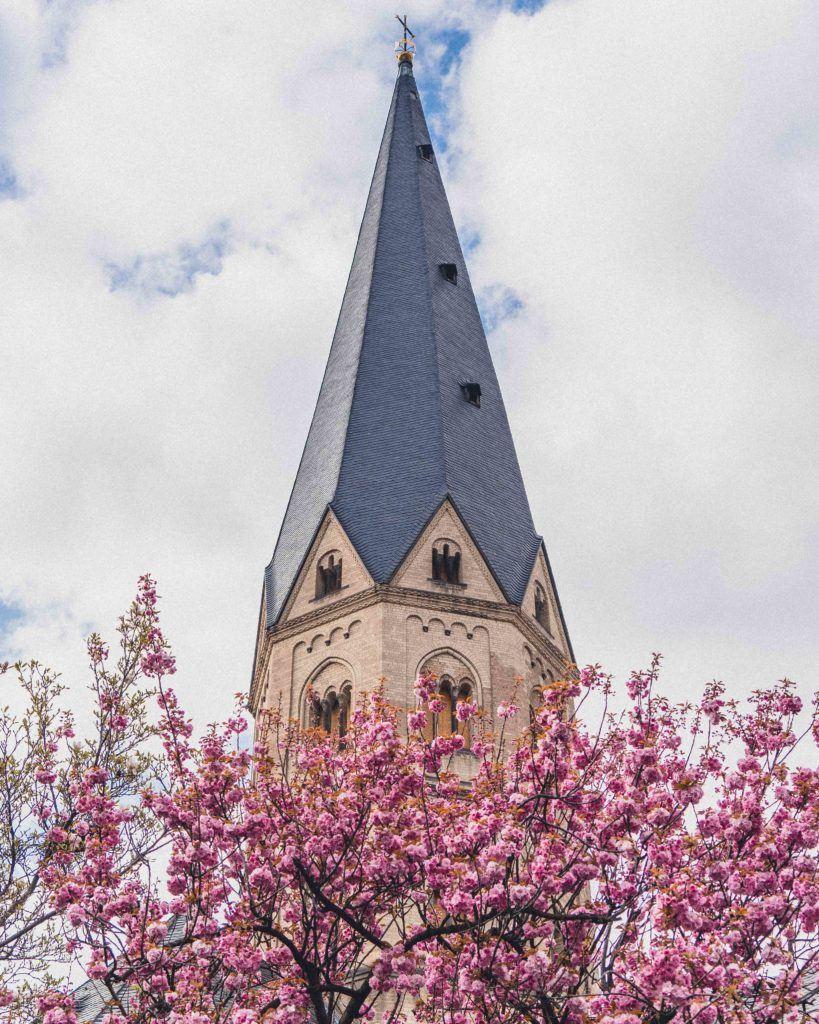 Bonn Minster (Bonner Münster) Blossom