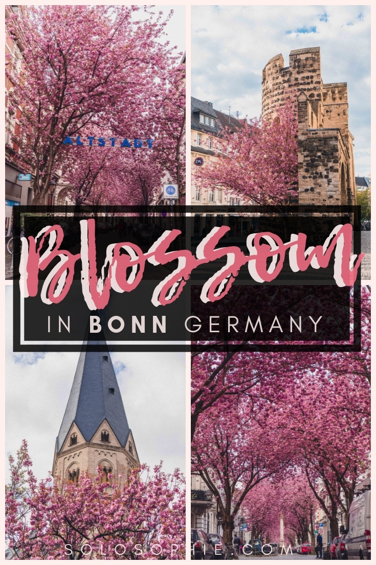 Here's your guide to finding the best of Bonn cherry blossom. Thinking of visiting Germany in the spring? Here's where to enjoy and see cherry blossom trees in the North West city of Bonn!