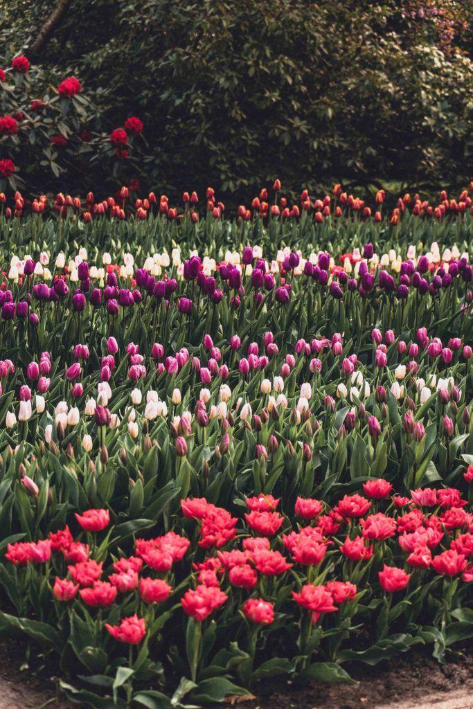 How to enjoy the best of Keukenhof tulip gardens in the netherlands