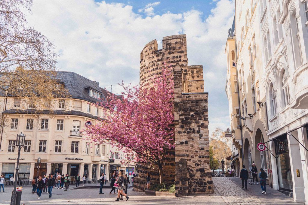 Sterntor City Gate in Bonn with cherry blossom tree