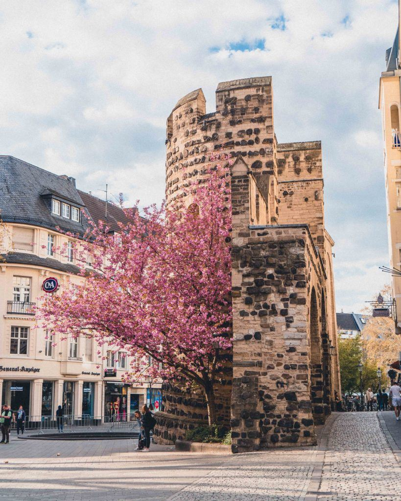 Looking to see the best cherry blossom trees and a tree arcade in Bonn, Germany? Here's your complete guide for the best secret locations and destinations in the historic city