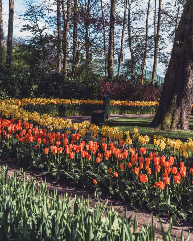 An Insider's Guide on How to Visit Keukenhof, the Garden of Europe in the Netherlands