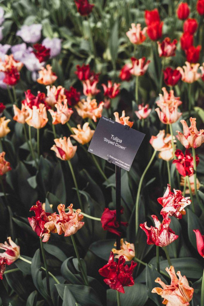 Things to know before visiting Keukenhof (and insider tips and secrets!)