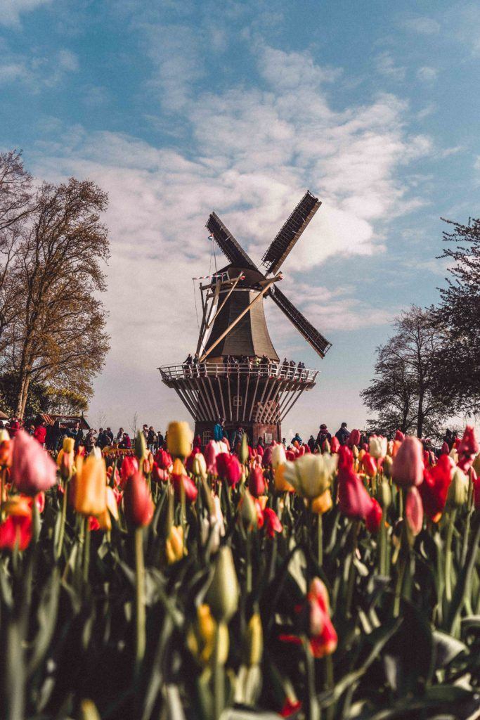 Here's how to Visit Keukenhof, the Garden of Europe as a day trip from Amsterdam in Holland, the Netherlands and where to find Dutch tulips near Lisse