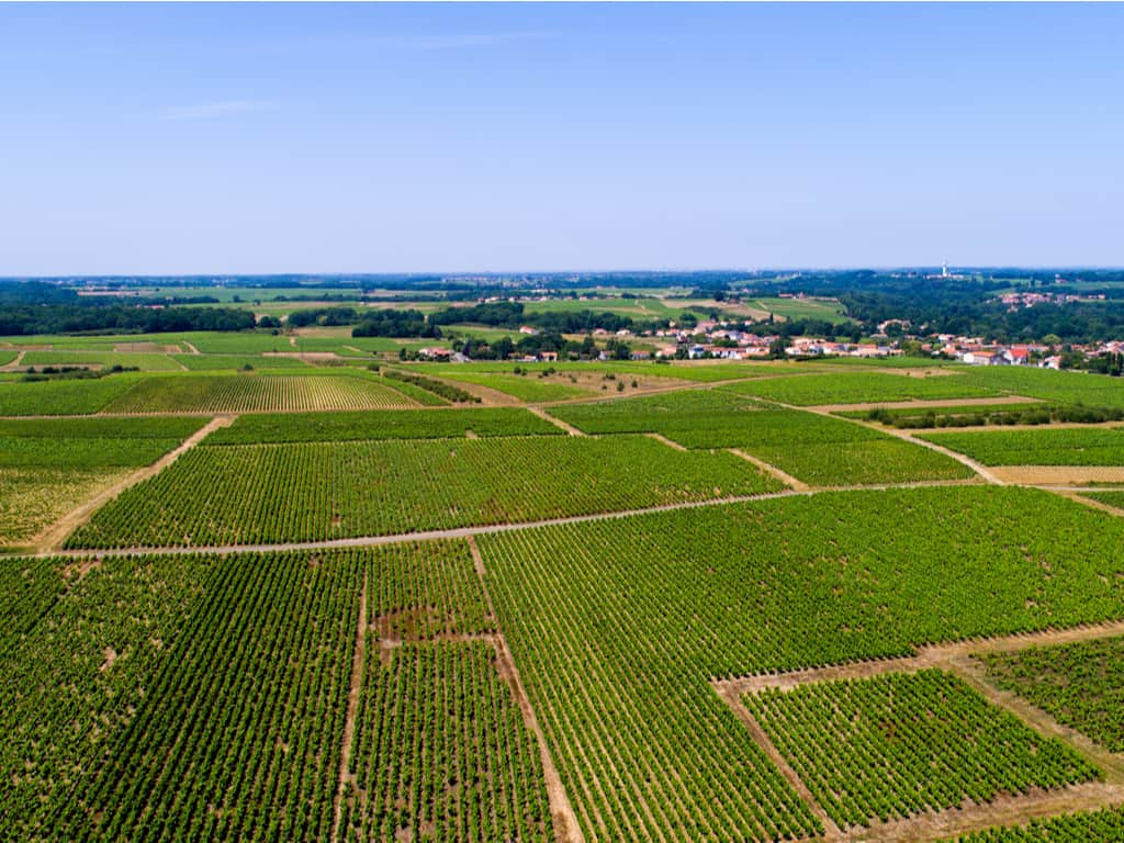 Discover the Vineyard of Nantes