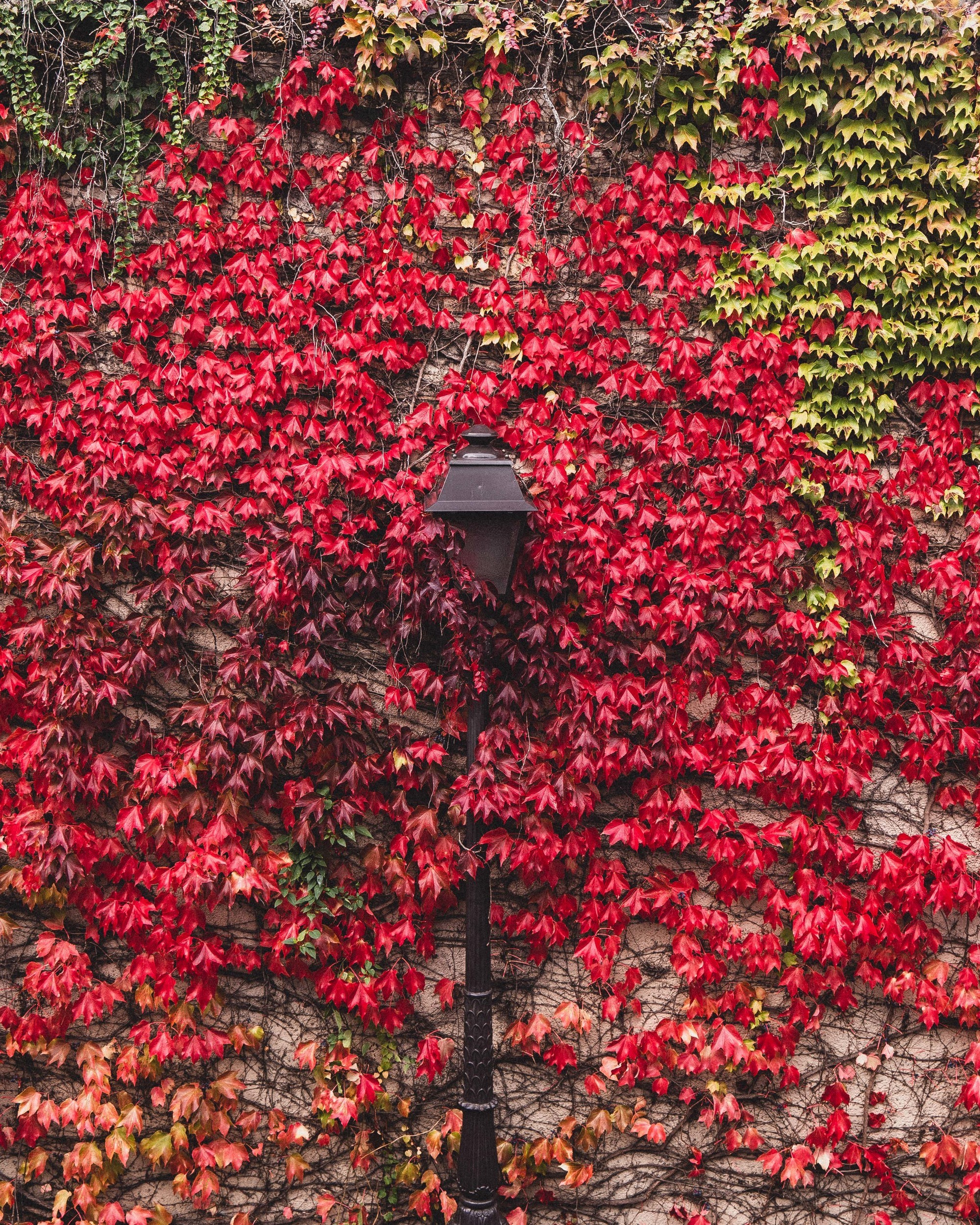 A Magical Guide to Autumn in Montmartre (With Photos!)