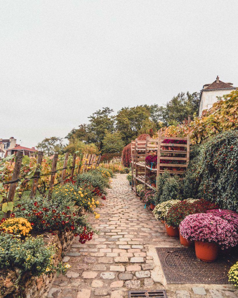 Clos Montmartre, vineyard in the 18th arrondissement of Paris, France