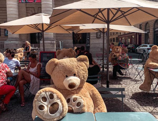 How did the bears in Parisian cafés begin?