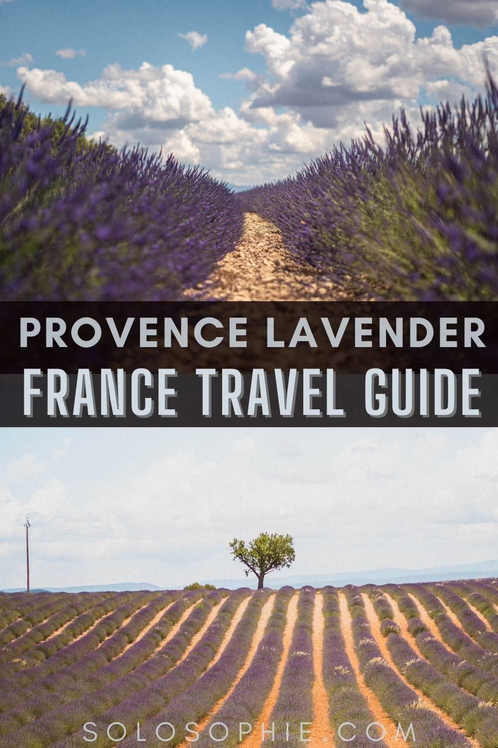 Best lavender in France/ Your Guide to the Best of Lavender Fields in Provence South of France