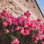 A Guide to the Best Things to do in Étampes, France