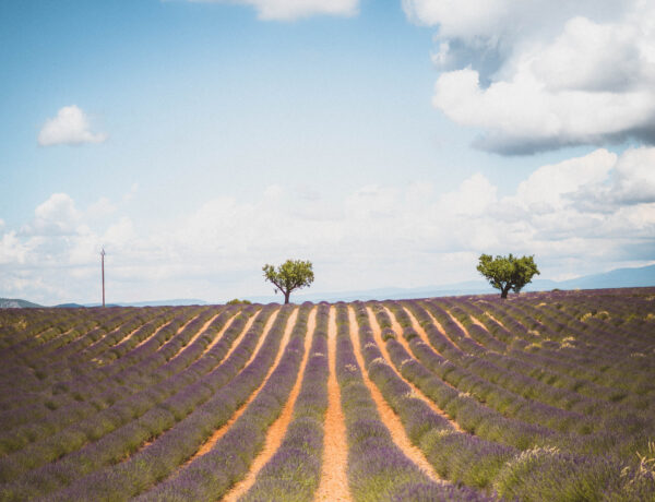 Your Guide to the Best of Lavender Fields in Provence